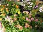ガーデンを彩る花